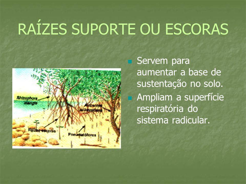 RAÍZES SUPORTE OU ESCORAS Servem para aumentar a base de sustentação no solo.