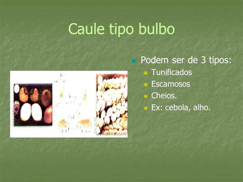 Caule tipo bulbo Podem ser de 3 tipos: Tunificados Escamosos Cheios. Ex: cebola, alho.