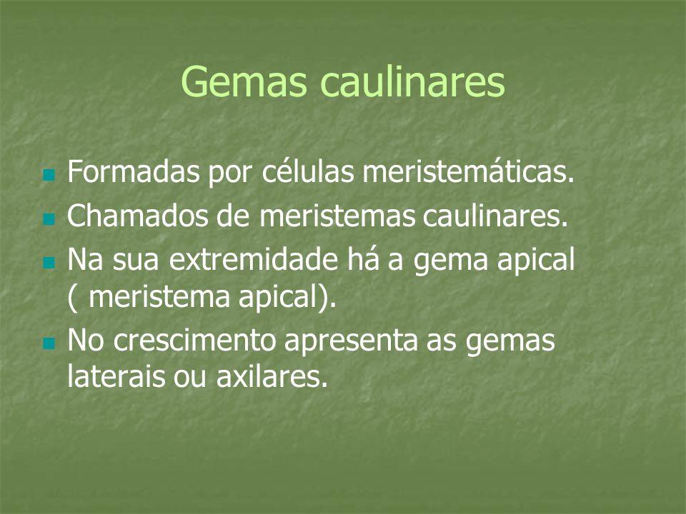 Gemas caulinares Formadas por células meristemáticas. Chamados de meristemas caulinares. Na sua extremidade há a gema apical ( meristema apical). No c