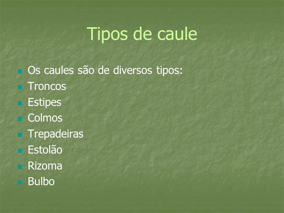 Tipos de caule Os caules são de diversos tipos: Troncos Estipes Colmos Trepadeiras Estolão Rizoma Bulbo