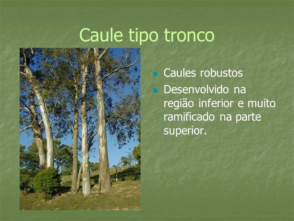 Caule tipo tronco Caules robustos Desenvolvido na região inferior e muito ramificado na parte superior.