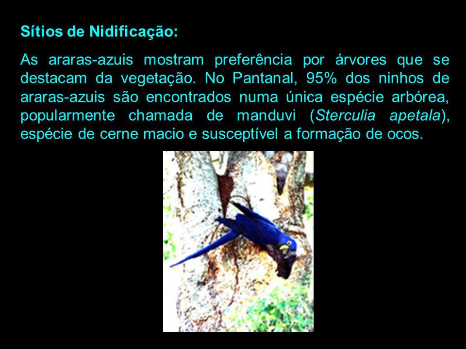 Até 45 dias de idade os filhotes estão sujeitos a predação por formigas, gaviões e irara. Eles são alimentados pelos pais até os seis meses, quando co