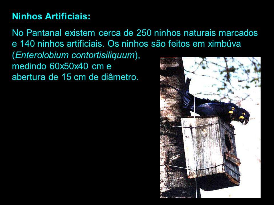 Sítios de Nidificação: As araras-azuis mostram preferência por árvores que se destacam da vegetação. No Pantanal, 95% dos ninhos de araras-azuis são e
