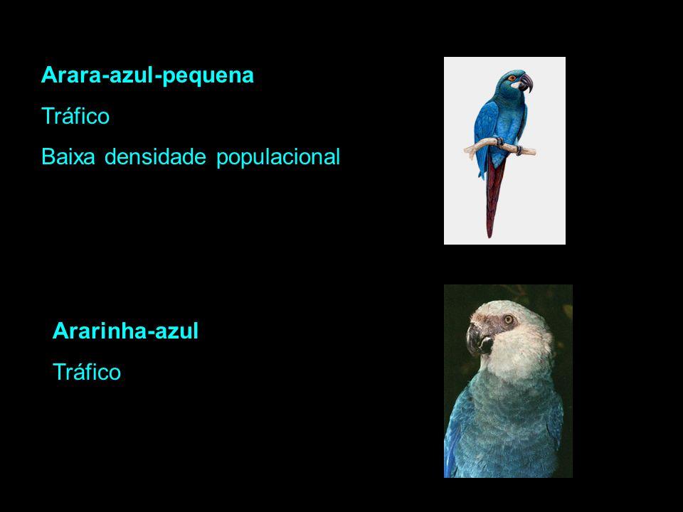 Principais ameaças: Arara-azul-grande Tráfico Coleta de penas - adornos Descaracterização do ambiente Arara-azul-de-Lear Tráfico Endemismo Descaracter