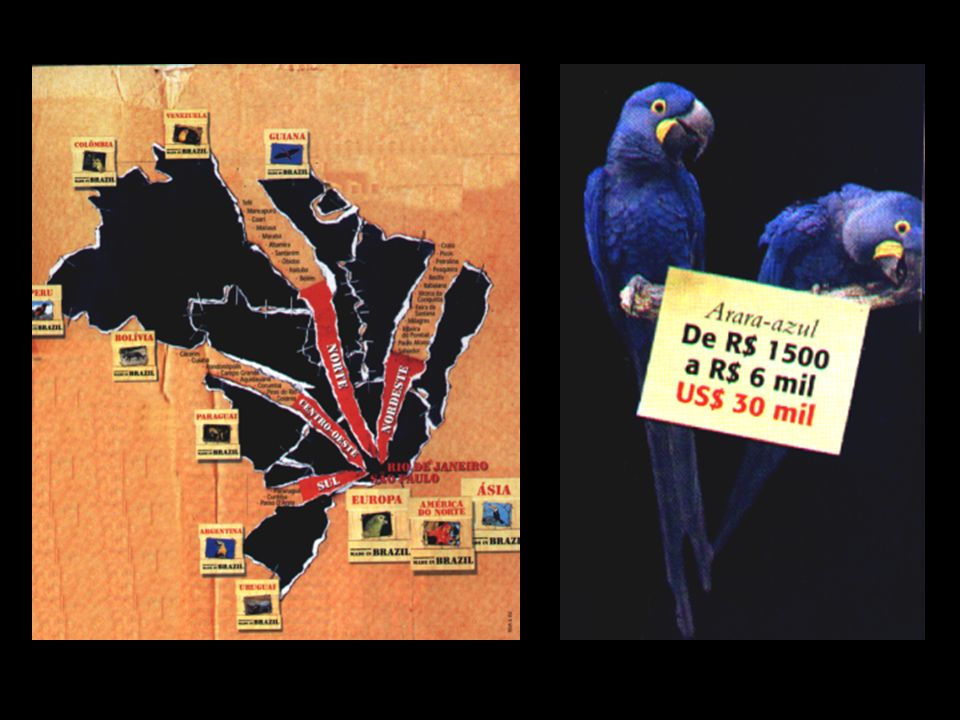 Tráfico: Segundo dados do Programa das Nações Unidas para o Meio Ambiente-PNUMA - 1992, cerca de 100 espécies desaparecem todos os dias da face da Ter
