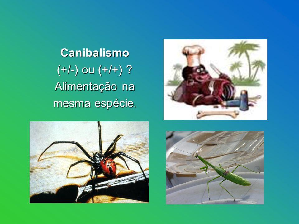 Canibalismo Canibalismo (+/-) ou (+/+) .(+/-) ou (+/+) .