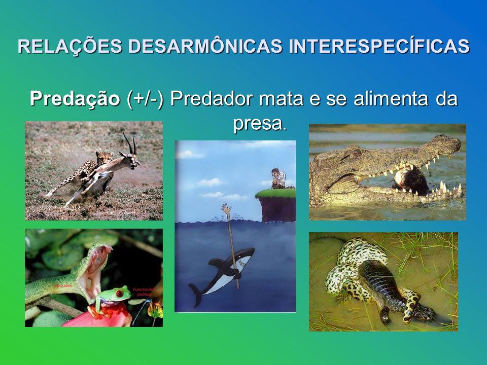 RELAÇÕES DESARMÔNICAS INTERESPECÍFICAS Predação (+/-) Predador mata e se alimenta da presa.