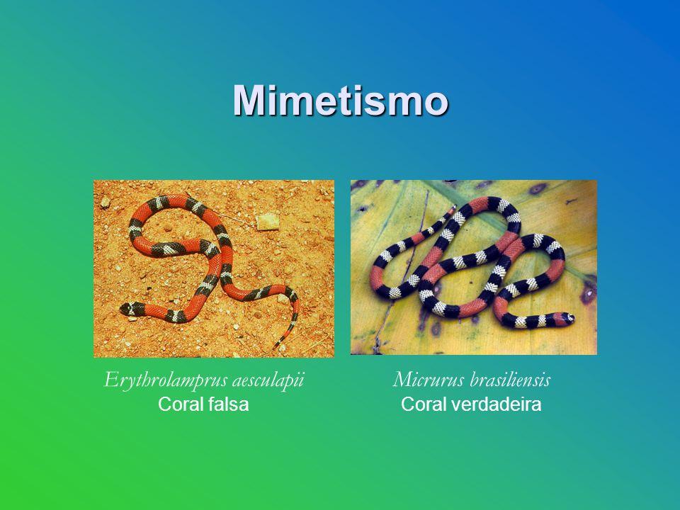 Mimetismo Erythrolamprus aesculapii Coral falsa Micrurus brasiliensis Coral verdadeira