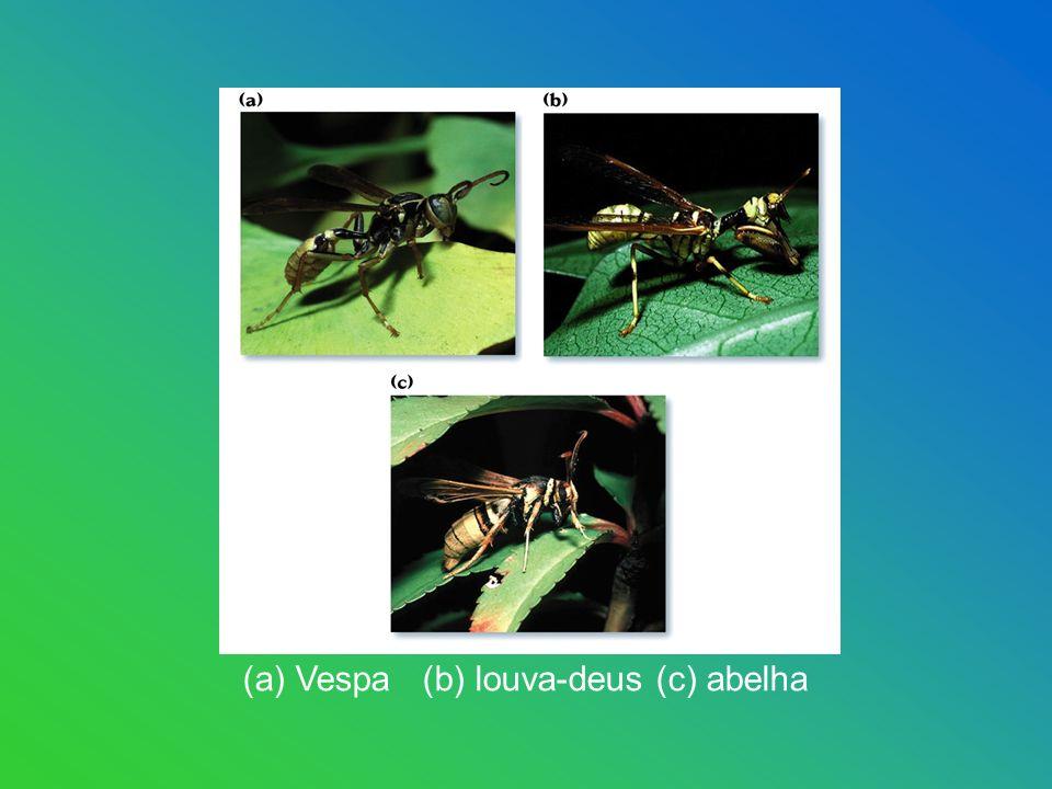 (a) Vespa (b) louva-deus (c) abelha