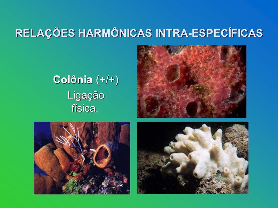 RELAÇÕES HARMÔNICAS INTRA-ESPECÍFICAS Colônia (+/+) Colônia (+/+) Ligação física. Ligação física.