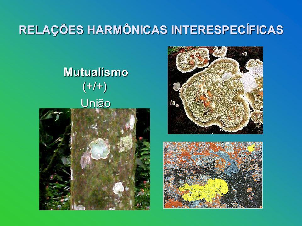 RELAÇÕES HARMÔNICAS INTERESPECÍFICAS Mutualismo (+/+) Mutualismo (+/+) União obrigatória.