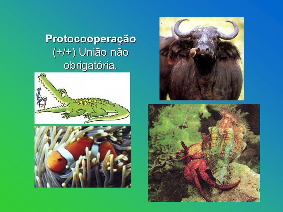 Protocooperação (+/+) União não obrigatória. Protocooperação (+/+) União não obrigatória.