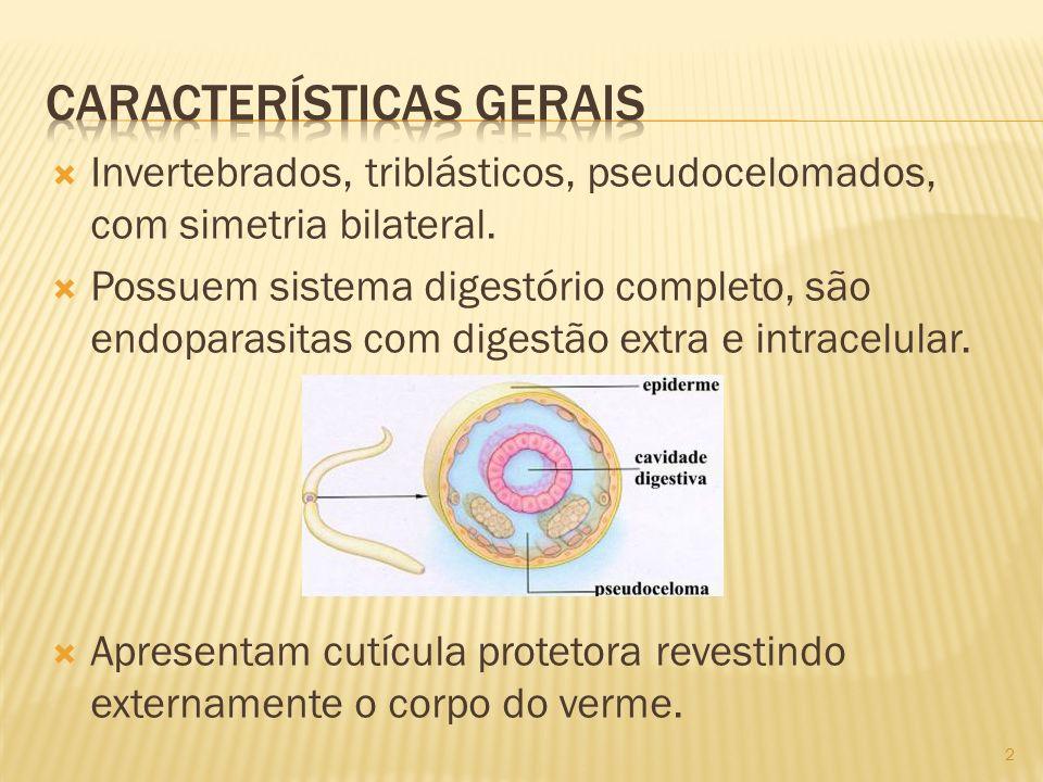 Invertebrados, triblásticos, pseudocelomados, com simetria bilateral. Possuem sistema digestório completo, são endoparasitas com digestão extra e intr