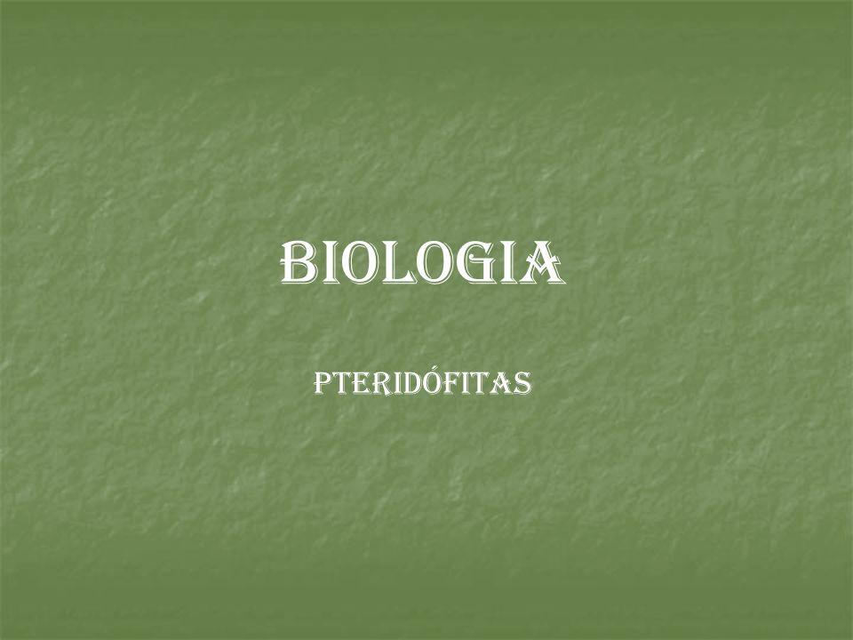 Pteridófita Habitat Terra, locais úmidos e sombreados.