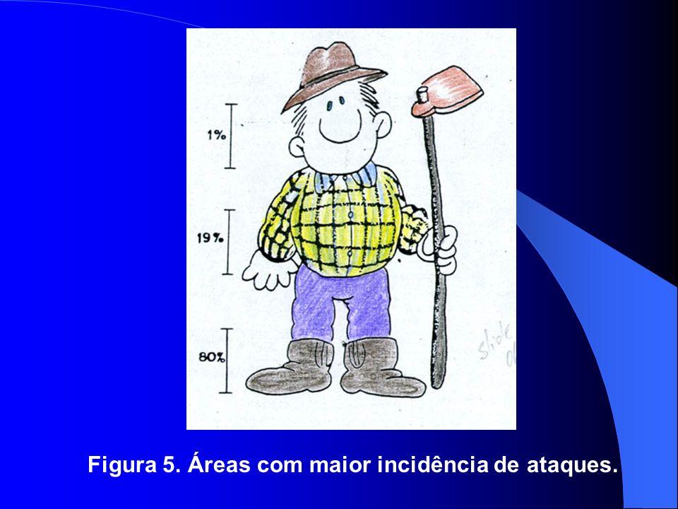 Figura 5. Áreas com maior incidência de ataques.