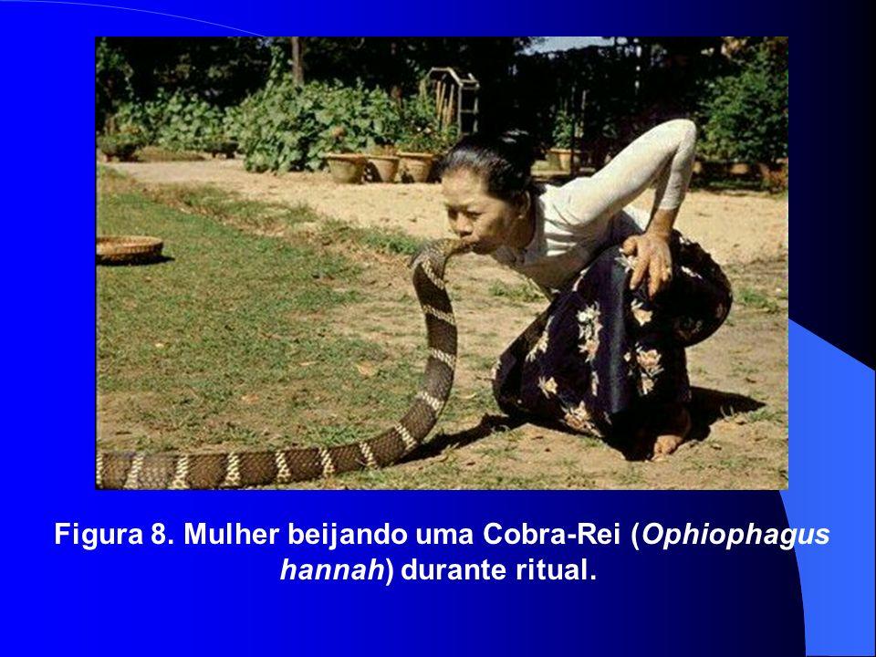 Figura 8. Mulher beijando uma Cobra-Rei (Ophiophagus hannah) durante ritual.