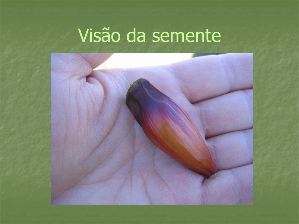 Visão da semente