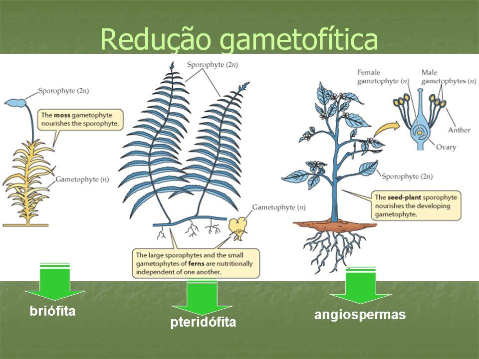 Redução gametofítica briófita pteridófita angiospermas