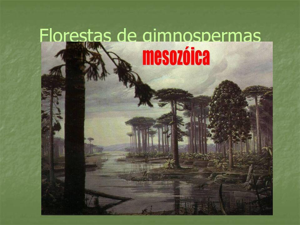Florestas de gimnospermas