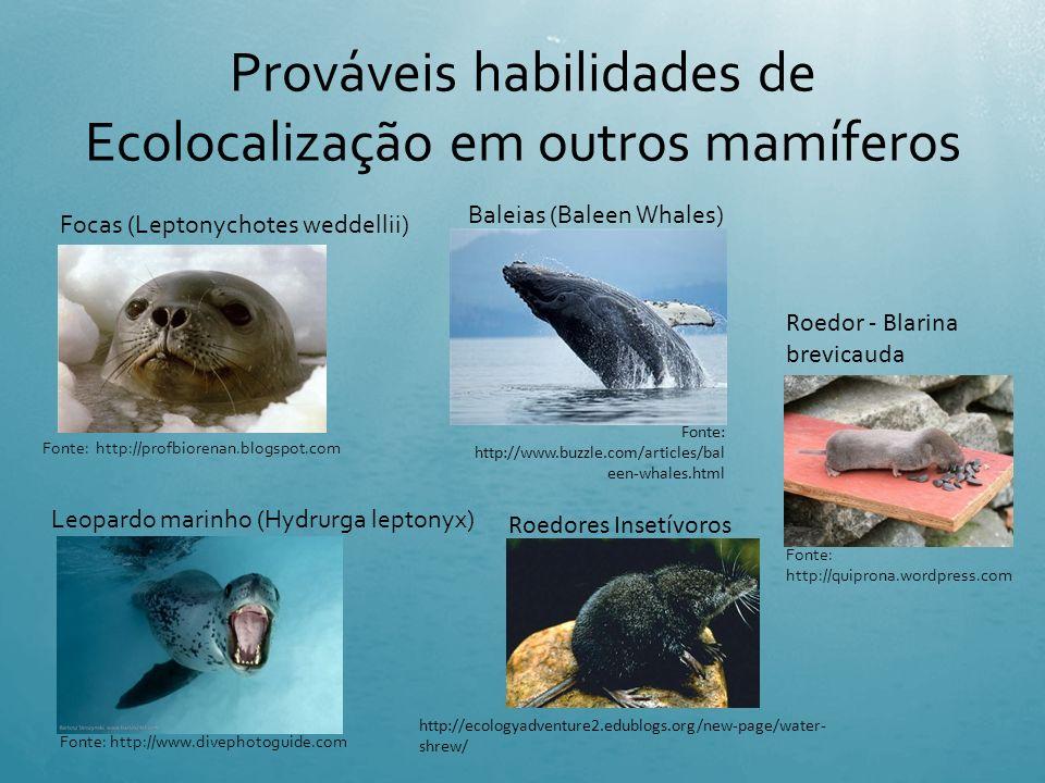 Ecolocalização artificial INTRODUÇÃO Radar, Sonar e Aparelhos de Ultra-sonografia Fonte: http://somefisica.blogspot.com/2010_0 9_16_archive.html