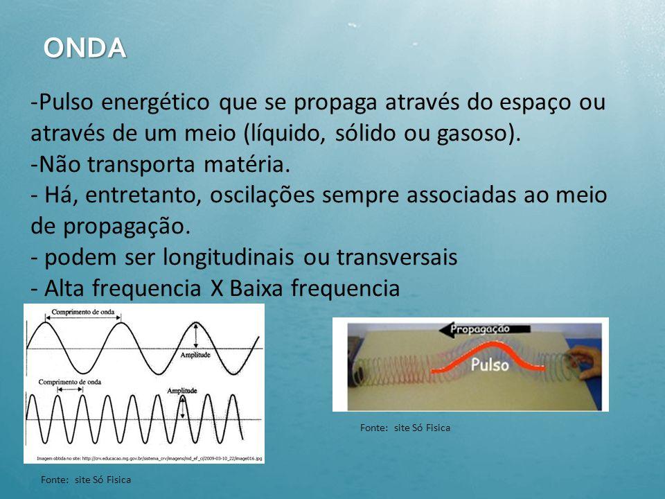 Prováveis habilidades de Ecolocalização em outros mamíferos Focas (Leptonychotes weddellii) Fonte: http://profbiorenan.blogspot.com Leopardo marinho (