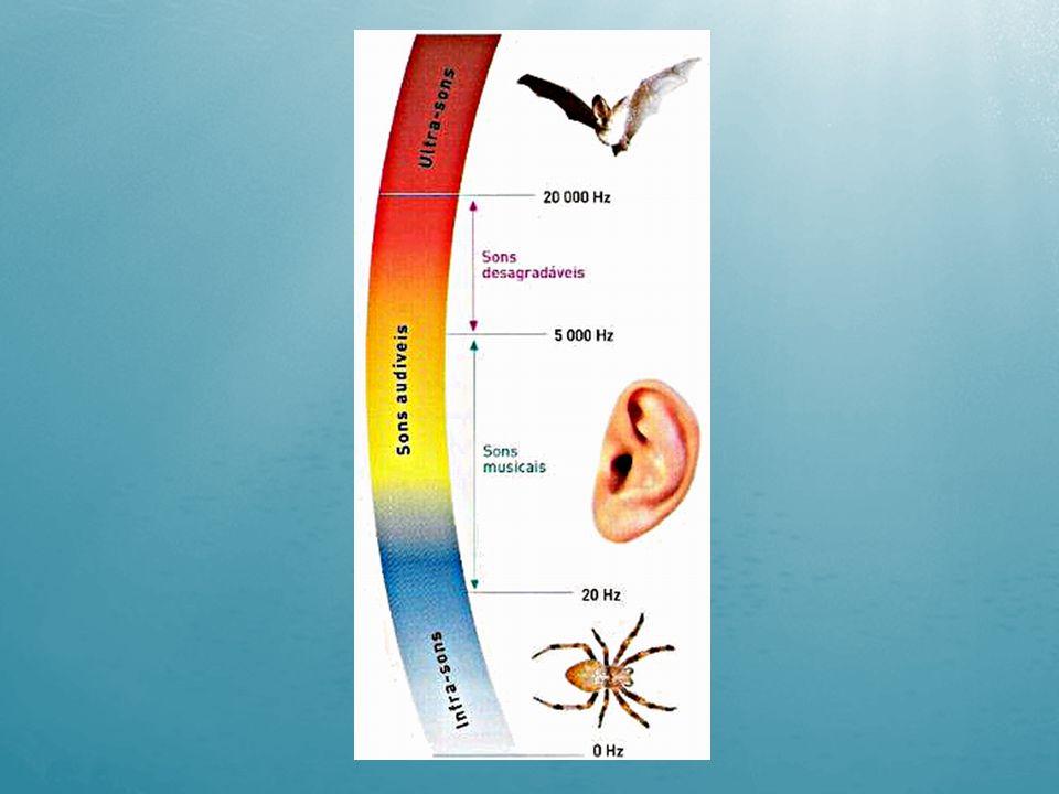 - ondas sonoras são longitudinais - pressão, densidade do meio, temperatura e mobilidade das partículas -Reflexão do eco - Sonar ONDA ONDA