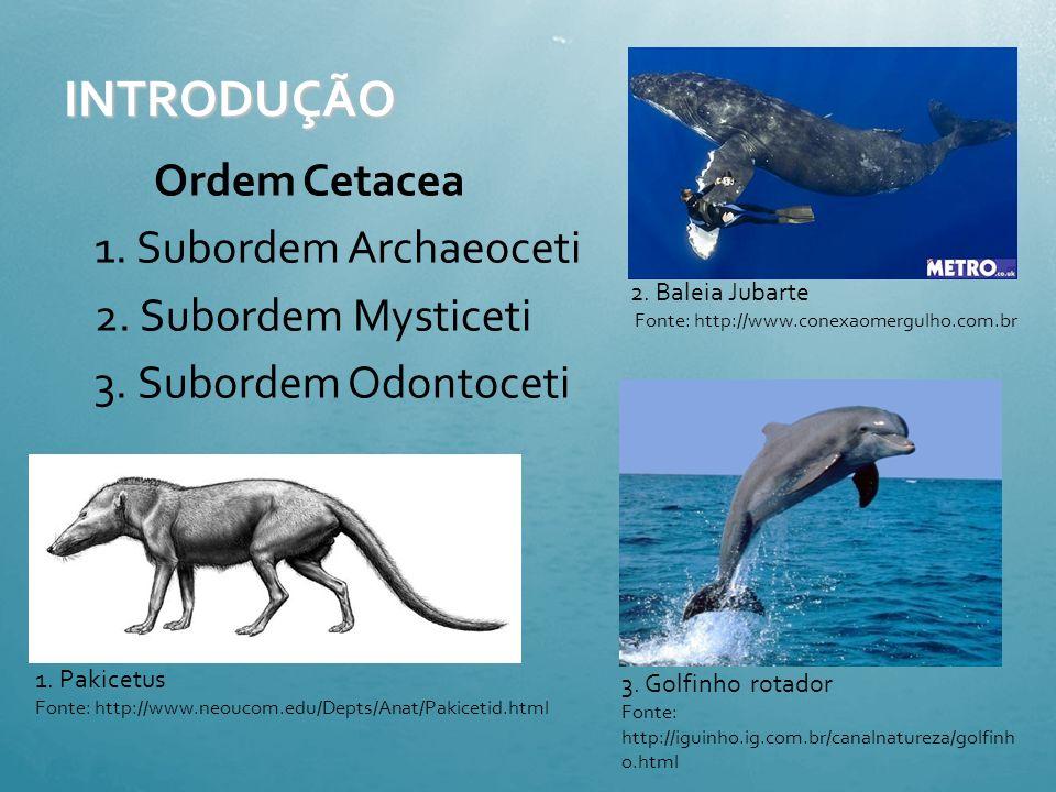 Ecolocação em Cetáceos Lauana Lemos Lilian Areal Marcela Marega Imamura Mariane Ferrarini Andrade Marina Carmona Hernandes
