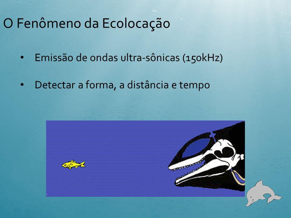 Órgãos envolvidos na ecolocalização em cetáceos