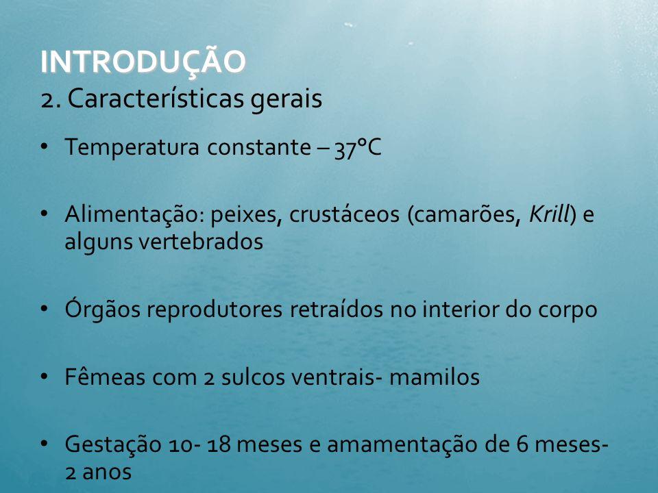 1.Morfologia externa INTRODUÇÃO Fonte: http://www.conexaomergulho.com.br