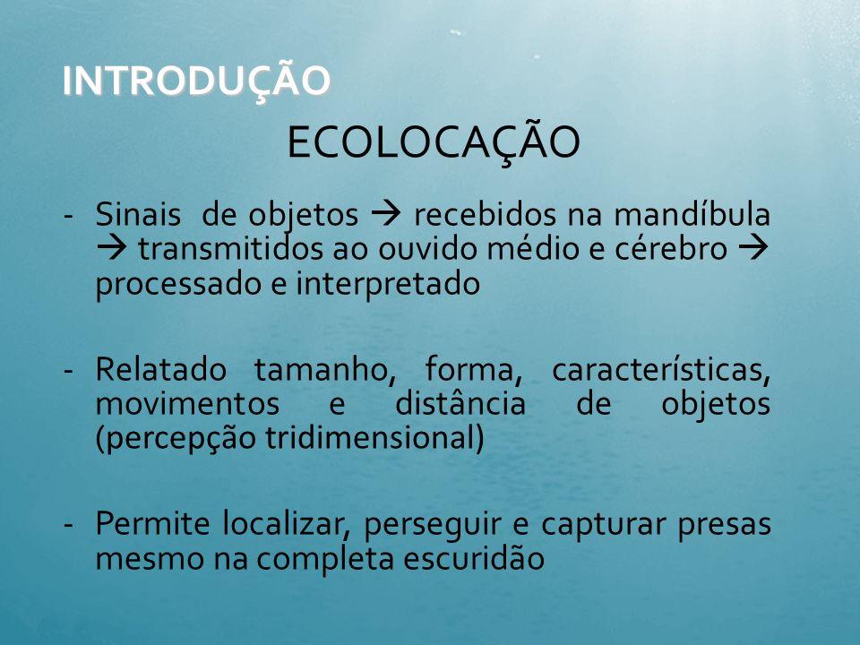 3. Sentidos Audição Visão Toque Paladar e olfato- menos desenvolvidos Capacidade de orientação através do campo magnético Ecolocalização / Biosonar Ec