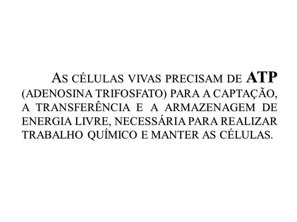 A S CÉLULAS VIVAS PRECISAM DE ATP (ADENOSINA TRIFOSFATO) PARA A CAPTAÇÃO, A TRANSFERÊNCIA E A ARMAZENAGEM DE ENERGIA LIVRE, NECESSÁRIA PARA REALIZAR T