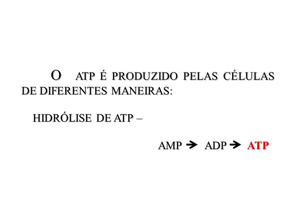 O ATP É PRODUZIDO PELAS CÉLULAS DE DIFERENTES MANEIRAS: O ATP É PRODUZIDO PELAS CÉLULAS DE DIFERENTES MANEIRAS: HIDRÓLISE DE ATP – HIDRÓLISE DE ATP –