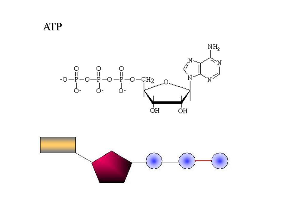 ATP ATP