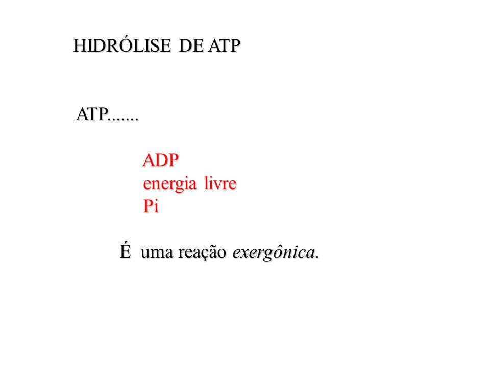 HIDRÓLISE DE ATP HIDRÓLISE DE ATP ATP....... ATP....... ADP ADP energia livre energia livre Pi Pi É uma reação exergônica. É uma reação exergônica.