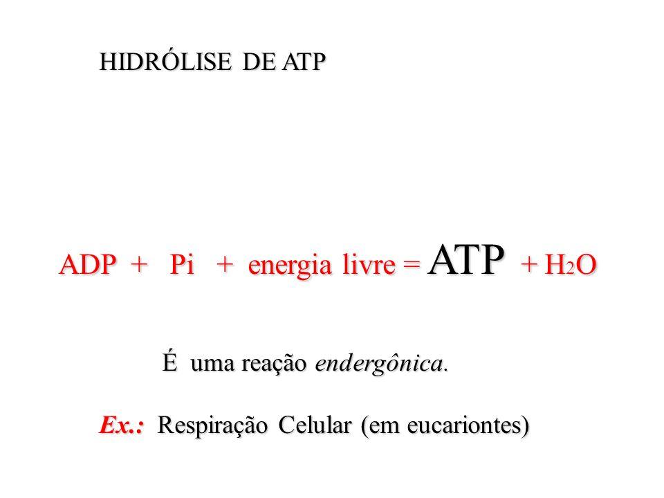 HIDRÓLISE DE ATP HIDRÓLISE DE ATP ADP + Pi + energia livre = ATP + H 2 O ADP + Pi + energia livre = ATP + H 2 O É uma reação endergônica. É uma reação