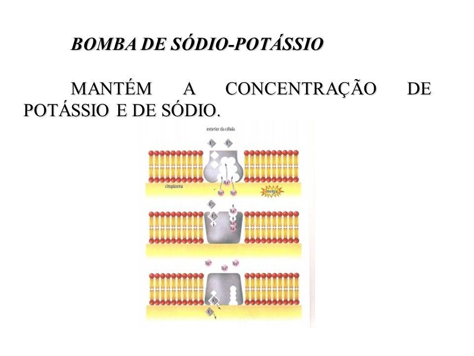 BOMBA DE SÓDIO-POTÁSSIO BOMBA DE SÓDIO-POTÁSSIO MANTÉM A CONCENTRAÇÃO DE POTÁSSIO E DE SÓDIO.
