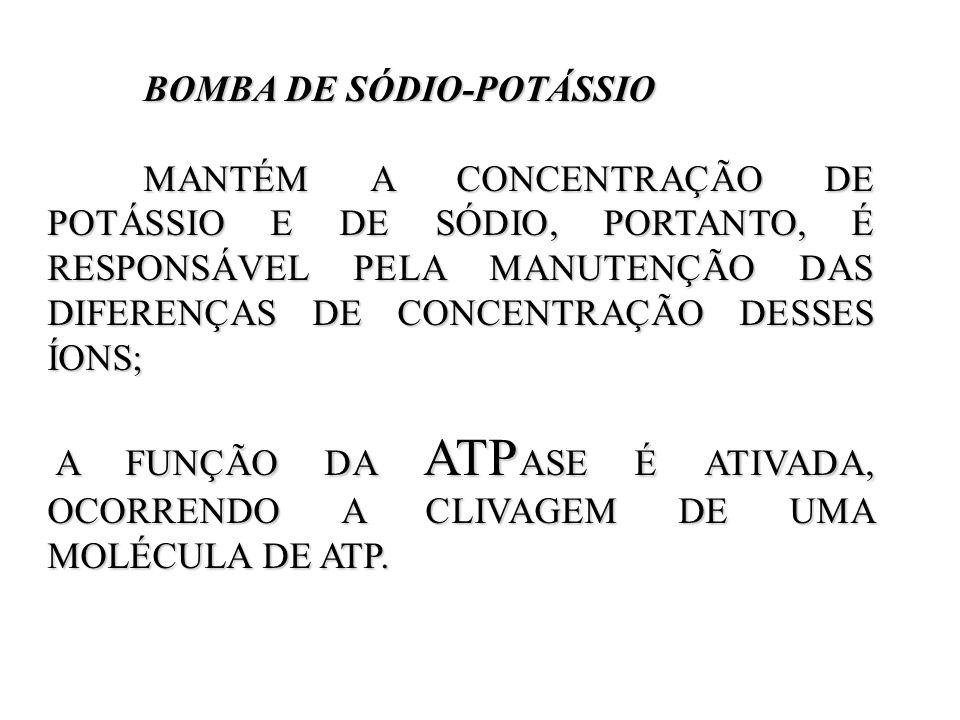 BOMBA DE SÓDIO-POTÁSSIO BOMBA DE SÓDIO-POTÁSSIO MANTÉM A CONCENTRAÇÃO DE POTÁSSIO E DE SÓDIO, PORTANTO, É RESPONSÁVEL PELA MANUTENÇÃO DAS DIFERENÇAS D