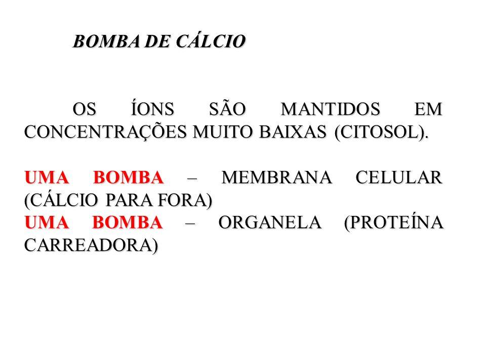 BOMBA DE CÁLCIO BOMBA DE CÁLCIO OS ÍONS SÃO MANTIDOS EM CONCENTRAÇÕES MUITO BAIXAS (CITOSOL). UMA BOMBA – MEMBRANA CELULAR (CÁLCIO PARA FORA) UMA BOMB