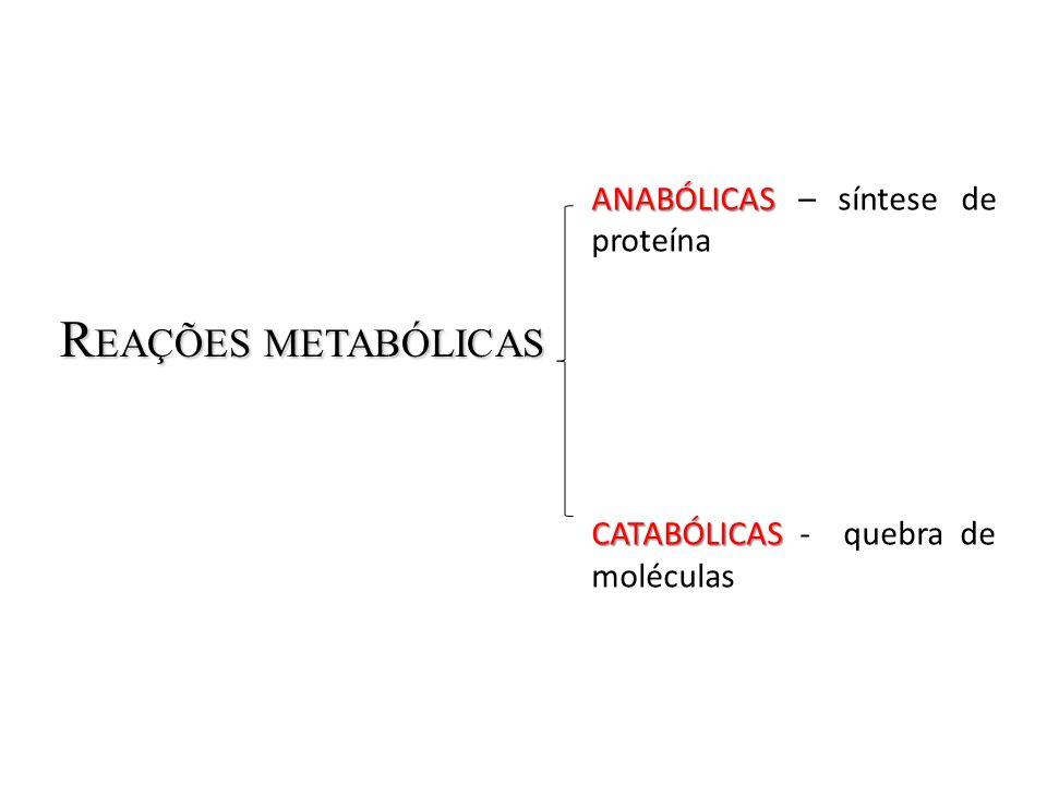 R EAÇÕES METABÓLICAS ANABÓLICAS ANABÓLICAS – síntese de proteína CATABÓLICAS CATABÓLICAS - quebra de moléculas