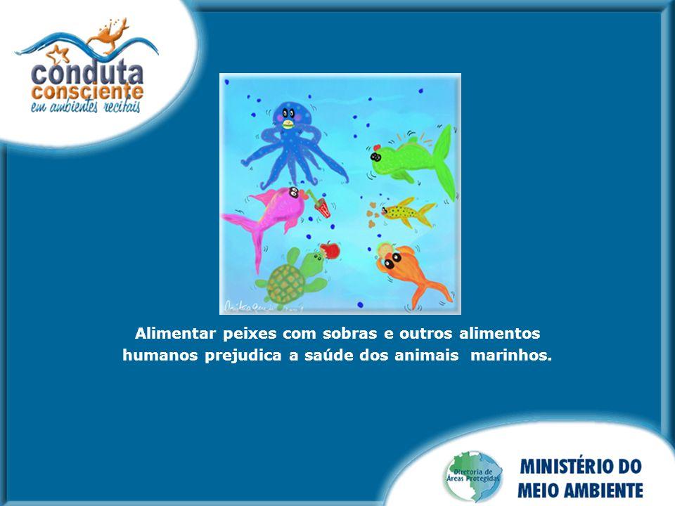 Alimentar peixes com sobras e outros alimentos humanos prejudica a saúde dos animais marinhos.