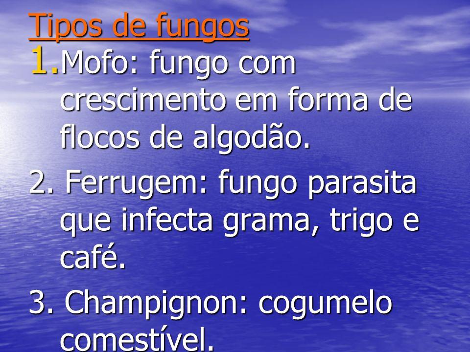 Tipos de fungos 1. Mofo: fungo com crescimento em forma de flocos de algodão. 2. Ferrugem: fungo parasita que infecta grama, trigo e café. 3. Champign