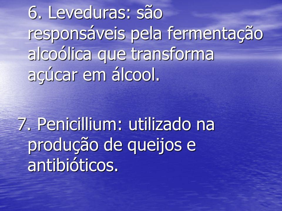 6. Leveduras: são responsáveis pela fermentação alcoólica que transforma açúcar em álcool. 6. Leveduras: são responsáveis pela fermentação alcoólica q