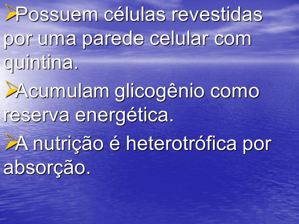 Acumulam glicogênio como reserva energética. Acumulam glicogênio como reserva energética. A nutrição é heterotrófica por absorção. A nutrição é hetero