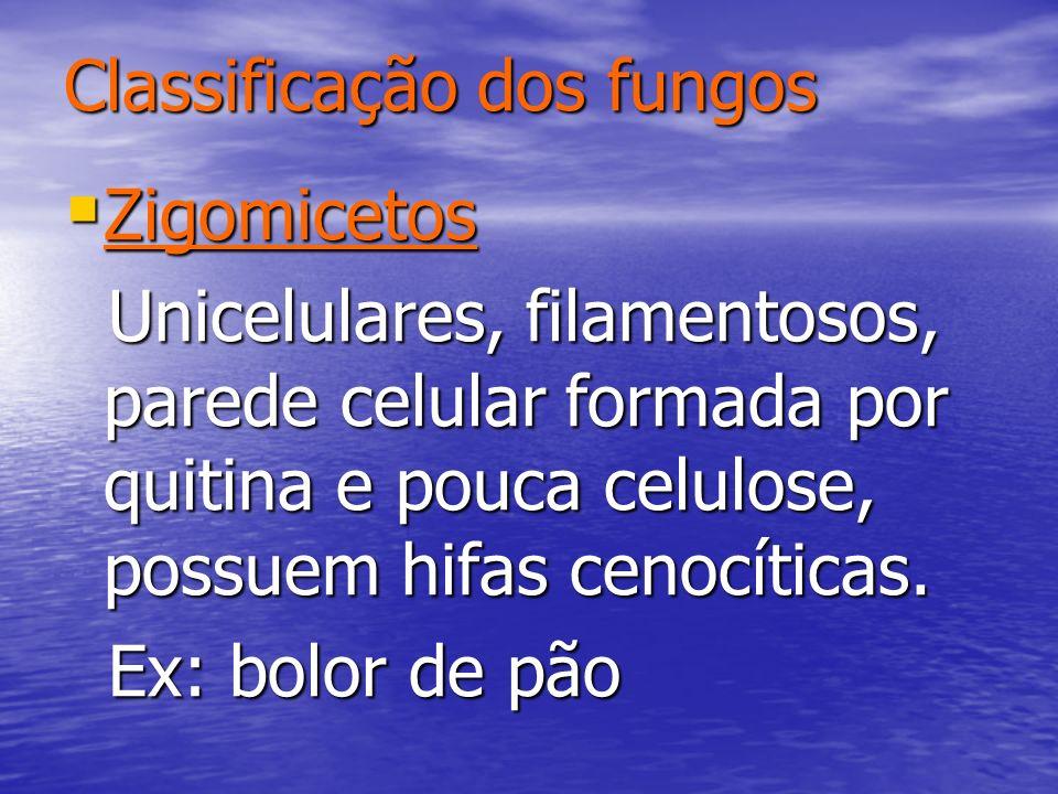 Classificação dos fungos Zigomicetos Zigomicetos Unicelulares, filamentosos, parede celular formada por quitina e pouca celulose, possuem hifas cenocí