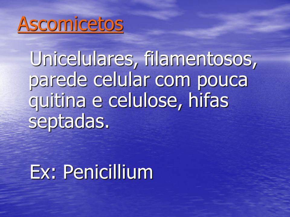 Ascomicetos Unicelulares, filamentosos, parede celular com pouca quitina e celulose, hifas septadas. Unicelulares, filamentosos, parede celular com po