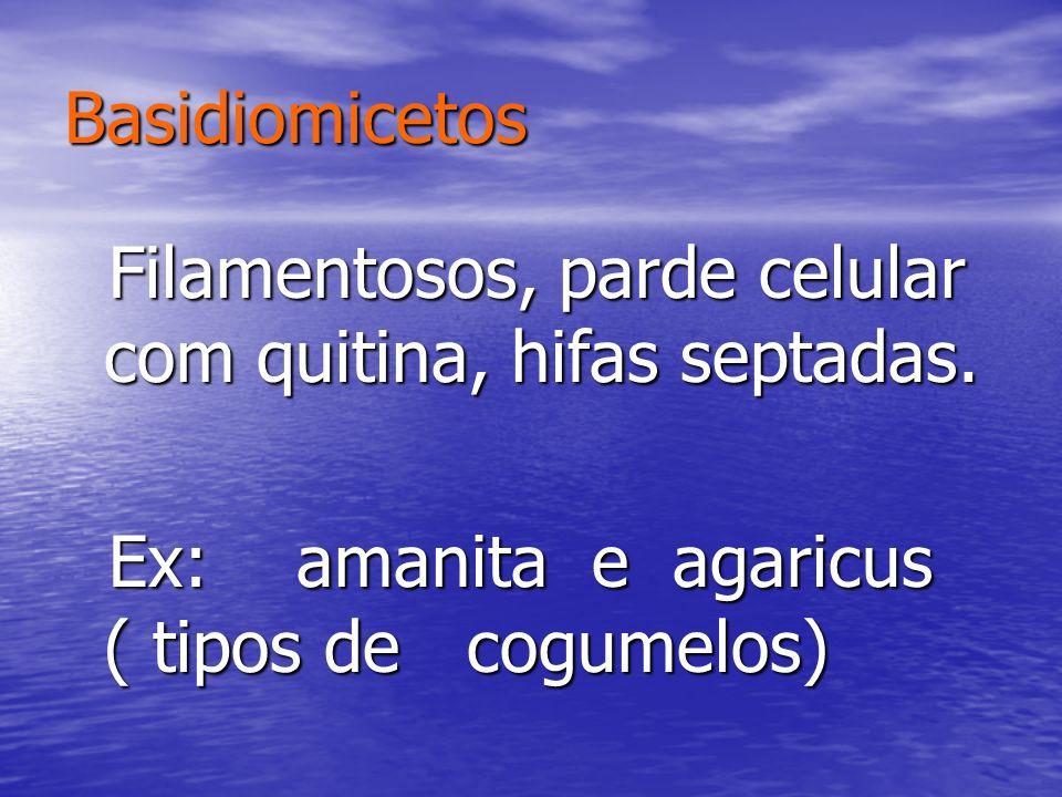 Basidiomicetos Filamentosos, parde celular com quitina, hifas septadas. Filamentosos, parde celular com quitina, hifas septadas. Ex: amanita e agaricu