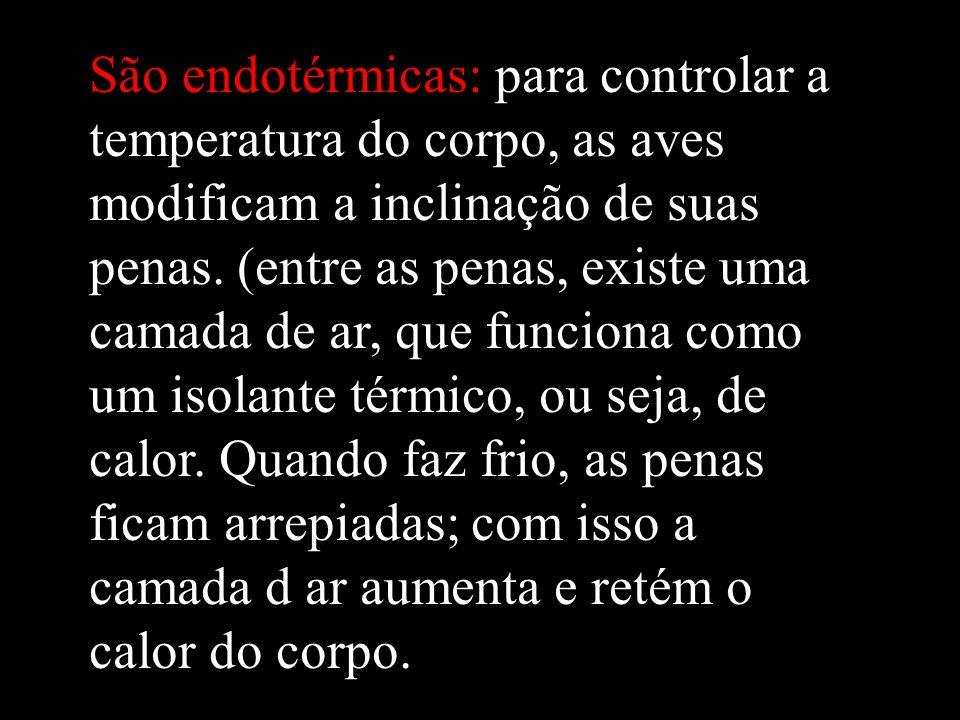 São endotérmicas: para controlar a temperatura do corpo, as aves modificam a inclinação de suas penas. (entre as penas, existe uma camada de ar, que f