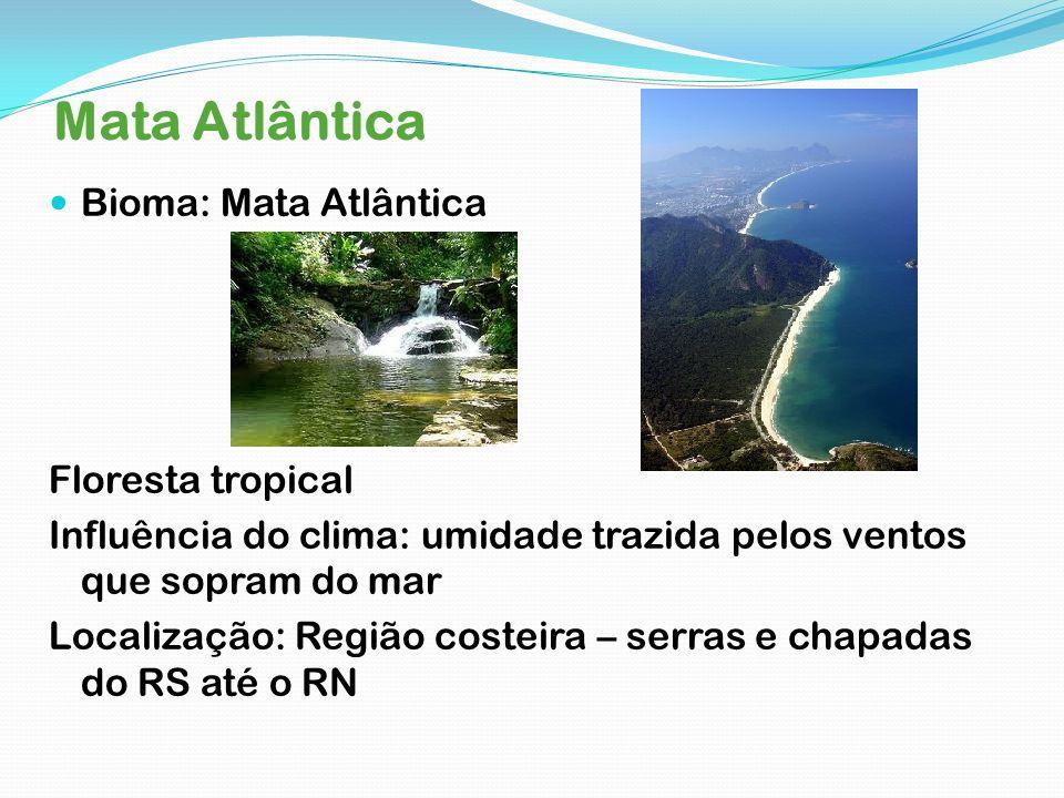 Mata Atlântica Bioma: Mata Atlântica Floresta tropical Influência do clima: umidade trazida pelos ventos que sopram do mar Localização: Região costeir