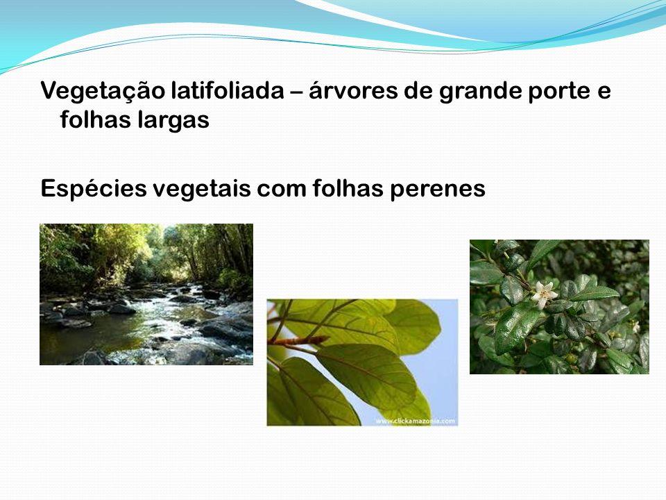 Vegetação latifoliada – árvores de grande porte e folhas largas Espécies vegetais com folhas perenes