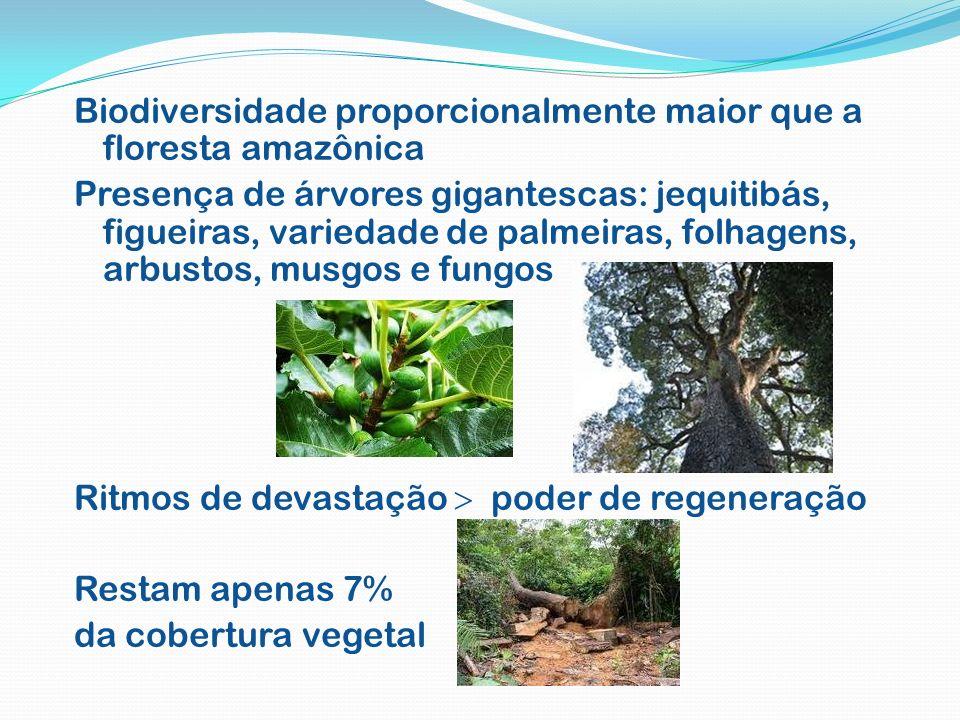 Biodiversidade proporcionalmente maior que a floresta amazônica Presença de árvores gigantescas: jequitibás, figueiras, variedade de palmeiras, folhag